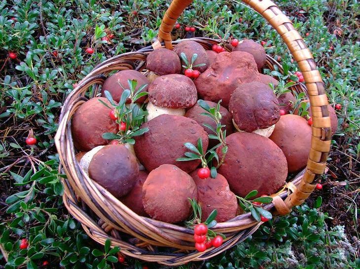 есть ли грибы в ивановской области сейчас 2017 результат белье перестанет